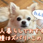 一人暮らし・おすすめ犬種