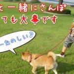 犬と一緒に散歩