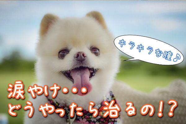 涙やけの愛犬を治す方法